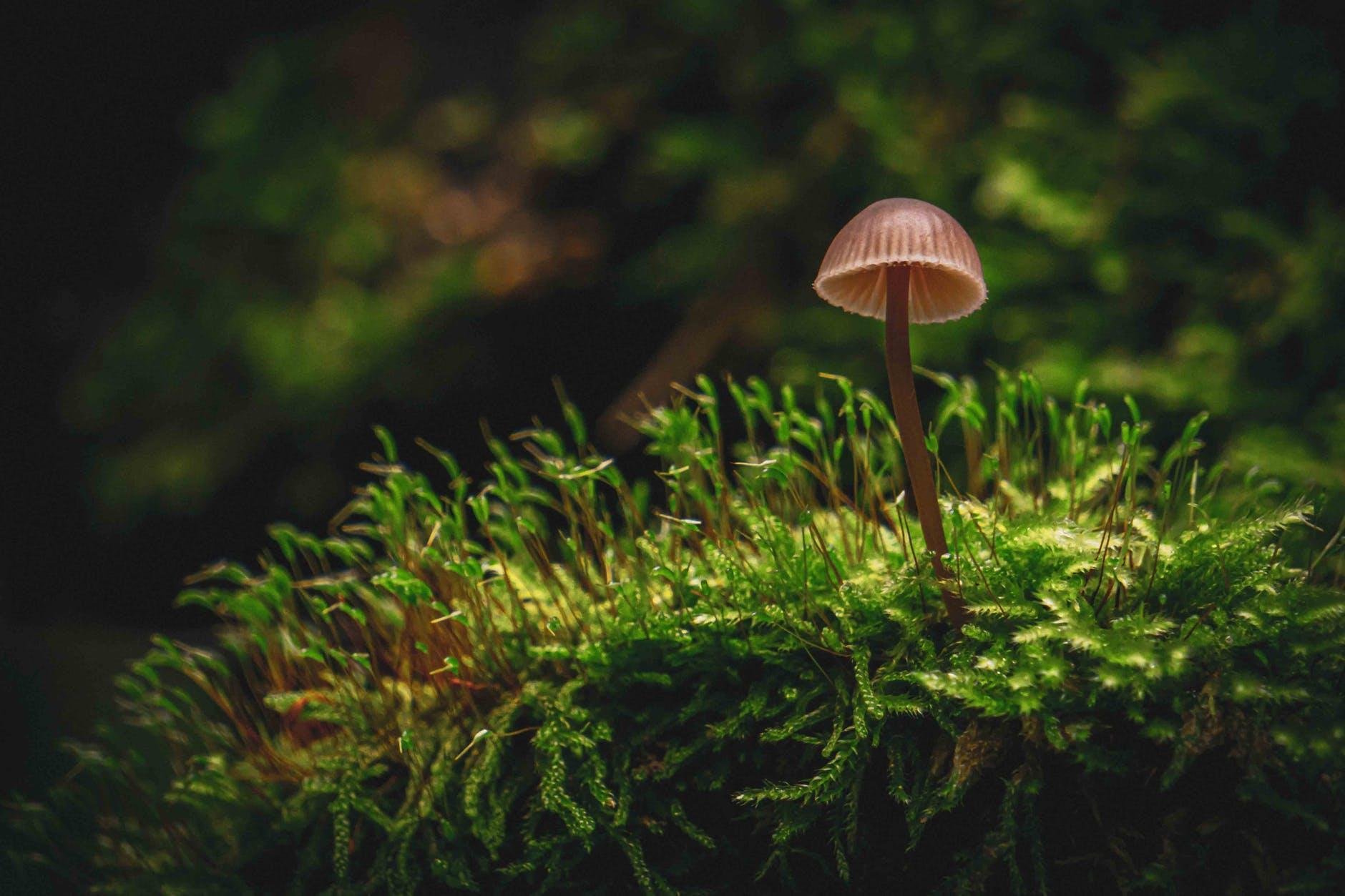 brown mushroom on green grass